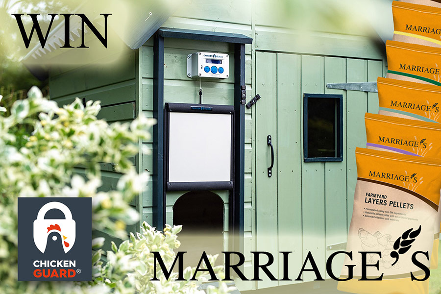 WIN a ChickenGuard <sup>©</sup> Combi & Marriage's Feed Vouchers!