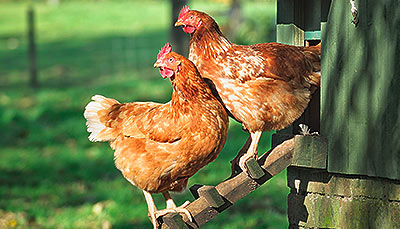 Marriage's - Quality Pet Foods and Animal Feeds