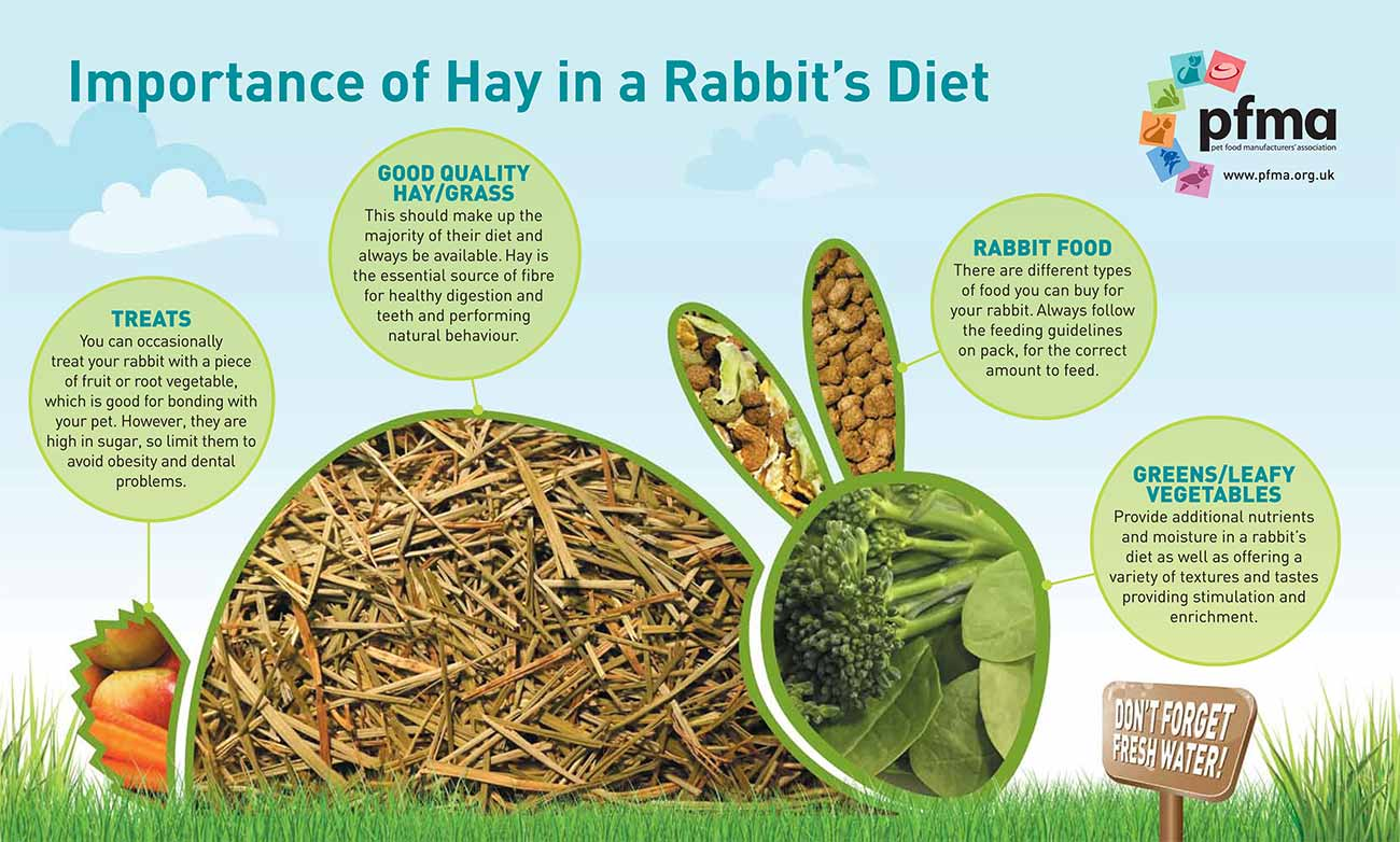 The importance of hay in a rabbit's diet...