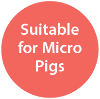 Suitable For Micro Pigs