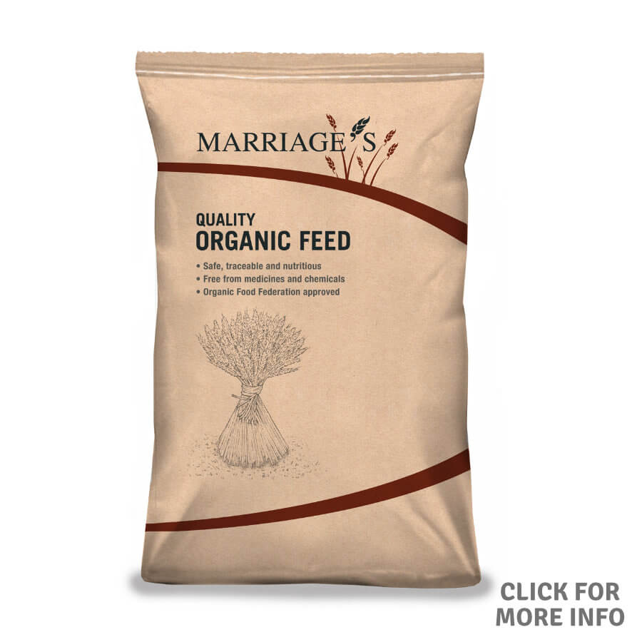 Organic Cleaned Feed Wheat