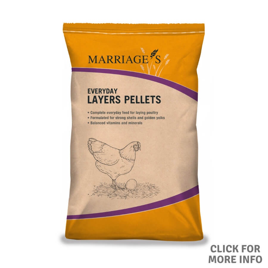 Everyday Layers Pellets