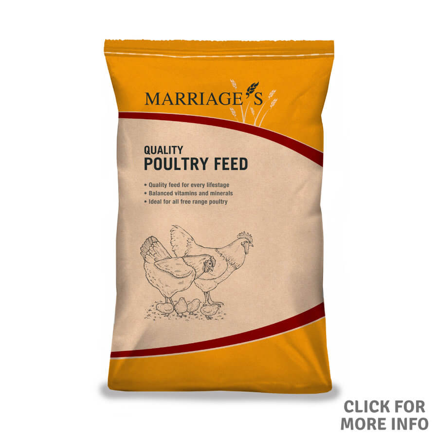 Poultry Growers Mash