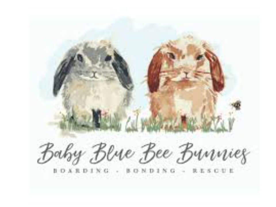 Baby Blue Bee Bunnies